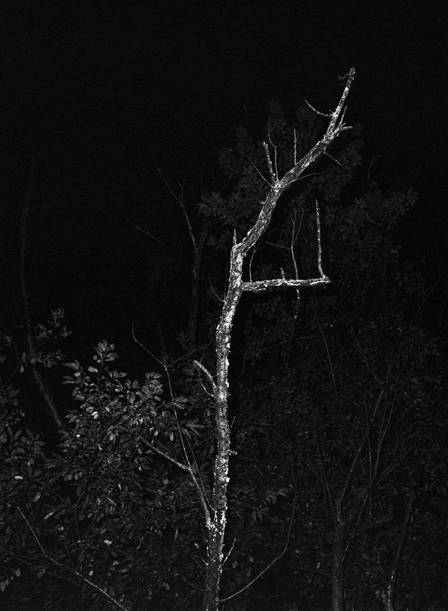Tree #3, 2018, Archival inkjet print from a scanned negative